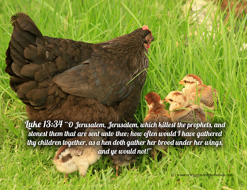 How often would I have gathered you together.  Luke 13:34 O Jerusalem, Jerusalem, which killest the prophets, and stonest them that are sent unto thee; how often would I have gathered thy children together, as a hen doth gather her brood under her wings, and ye would not!